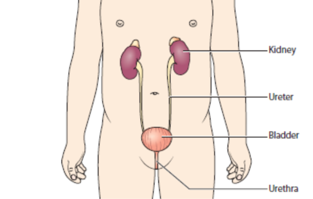 Causes of Proteinuria in Children