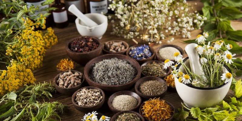 Why Are Herbs Medicinally Powerful
